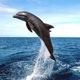 dolfijn-usbstick-182.jpg
